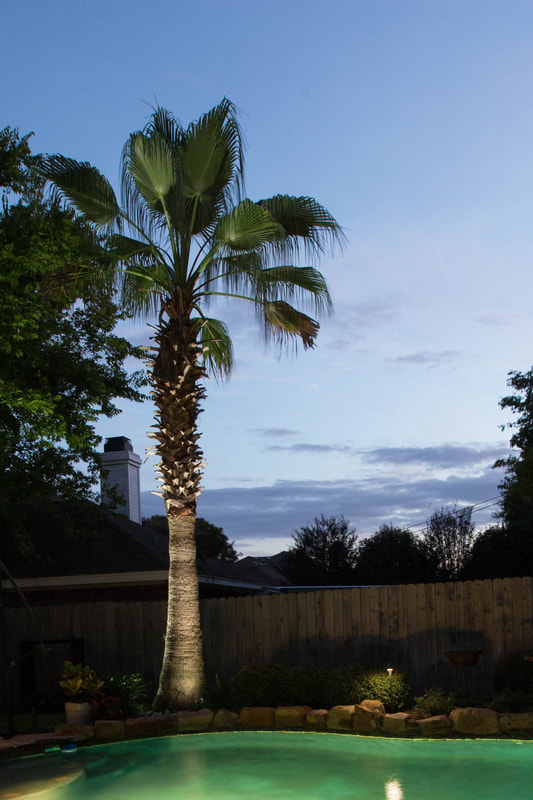 Palm tree landscaping